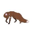 fox stands vector image vector image