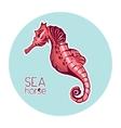 Hand drawn seahorse Marine life vector image