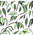 seamless pattern with leaves of ficus benjamin vector image vector image