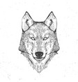 wolf head on white vector image vector image
