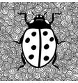 black and white image of ladybug vector image