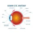 cartoon eye anatomy scheme human eye ball vector image vector image