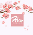 hello spring sakura background image vector image