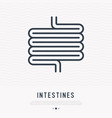 intestines thin line icon vector image