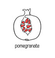 pomegranate line art vector image vector image