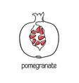 pomegranate line art vector image