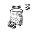 Sketch of raspberry jam in jar and berries vector image