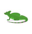 basilisk lizard animal standing on a white vector image