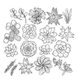 Graphic succulent collection vector image vector image