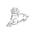 labrador black and white outline vector image