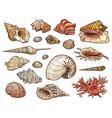 seashells snail clam shellfish and conch vector image vector image