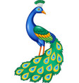 cartoon beautiful peacock vector image vector image