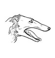 greyhound head in profile vector image vector image