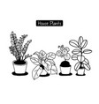 hand drawn house plants in pots vector image vector image