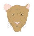 portrait of a cougar vector image