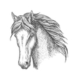 Purebred horse head sketch for equine sport design vector image vector image