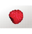 ripe realistic raspberry on vector image
