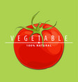 close up tomato vector image vector image