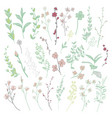 colorful drawn herbs plants and flowers vector image