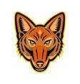jackal head front mascot vector image
