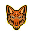 jackal head front mascot vector image vector image