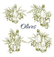 Olive oil and olives sketch icons set