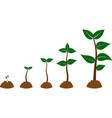 plant growing vector image vector image