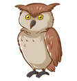 wild owl with brown feather on white background vector image