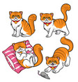 cute persian cat set vector image