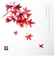 Leaves of red Japanese maple vector image