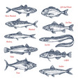 sketch icons of sea and ocean fish vector image vector image