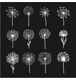 tender wild dandelion in all phases of blooming vector image