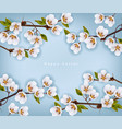 cherry flowers border realistic branches vector image vector image