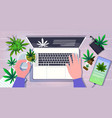 human hands using laptop medical cannabis leaves vector image