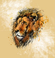 colored hand sketch lion head vector image