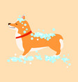 happy cute dog welsh corgi puppy wash grooming vector image vector image