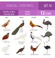 poultry farming peafowl ostrich pheasant quail vector image