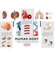 cartoon human body infographic template vector image vector image
