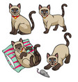 cute siamese cat set vector image vector image