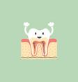 healthy tooth anatomy is fun vector image vector image