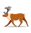 north deer animal standing on a white background vector image vector image