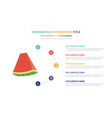 water melon infographic template concept with vector image vector image