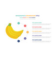banana infographic template concept with five vector image vector image