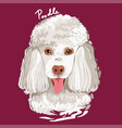 poodle painting poster vector image vector image