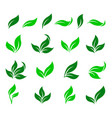 set curved green leaves design icons vector image