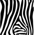 skin of zebra vector image vector image