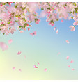 spring cherry blossom background vector image