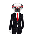 brutal french bulldog in elegant classic suit Hand vector image vector image