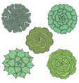 set images with ornamental plants vector image