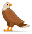 bald eagle bird on a white background vector image vector image